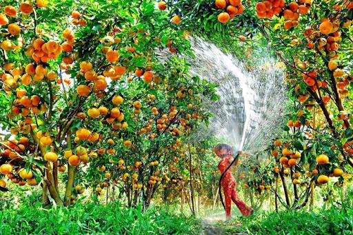 giá vé vào vườn trái cây Lái Thiêu