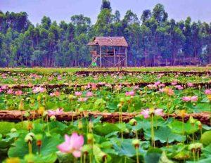 vẻ đẹp của khu sinh thái xanh đồng sen tháp mười