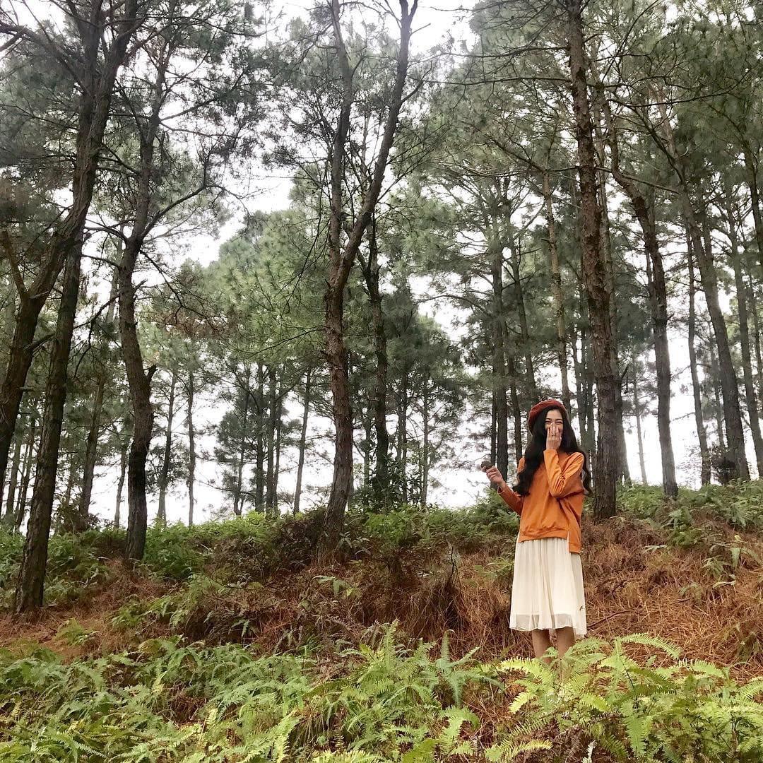 don-he-hoan-hao-tai-khu-resort-giua-rung-thong-xanh-trong-lanh-sat-xit-ha-noi-4